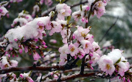 Прогноз погоди на 11 травня: знову заморозки