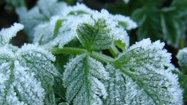 Травневі заморозки зашкодили урожаю