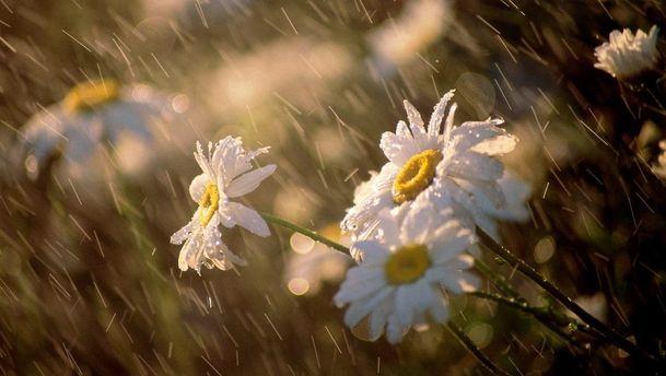 Прогноз погоди на 16 травня: у частину областей повертаються дощі