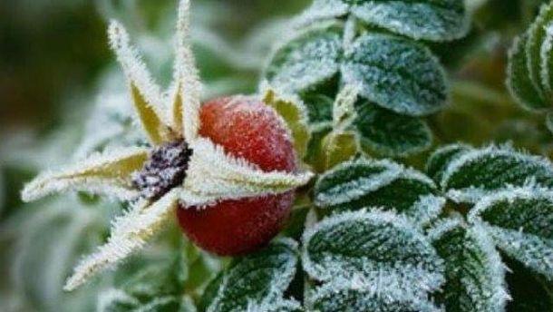 Заморозки нанесли вред урожаю