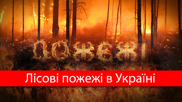 Какой ущерб нанесли Украине лесные пожары за год: впечатляющие цифры