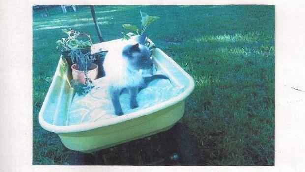 Як виглядає найстаріший у світі кіт