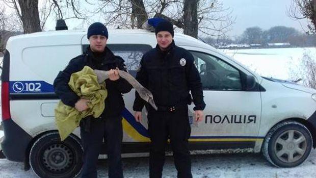 Поліція, Київ, лебідь