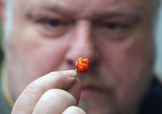 Садівник-любитель зВеликобританії виростив «найгостріший» перець всвіті