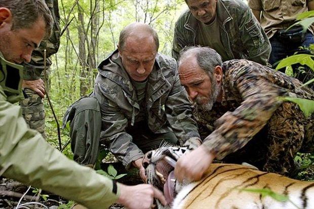 Путін присипляє тигрицю, 2008 рік