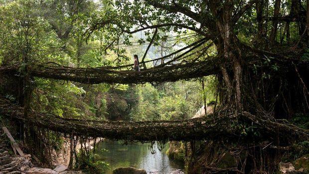 Міст в селі Черапунджі, Індія