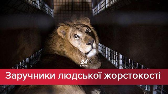 Жестокость ради развлечения: почему украинцы протестуют против животных в цирках