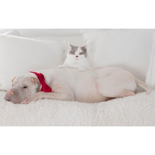Невероятная дружба: крошечная собака и кот не расстаются уже несколько лет