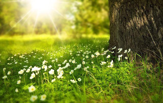Прогноз погоды на 4 мая: тепло с весенними грозами