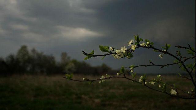 Прогноз погоды на 8 мая: всю Украину накроют весенние дожди с грозами, местами – град
